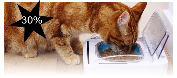Katt som spiser. Foto
